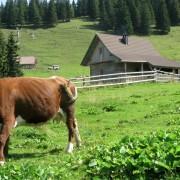 Agrarna skupnost pod planino