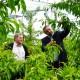 Židan na ogledu škode v sadovnjaku v Krškem